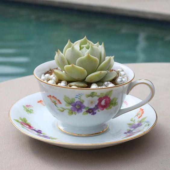 teacup succulent.jpg