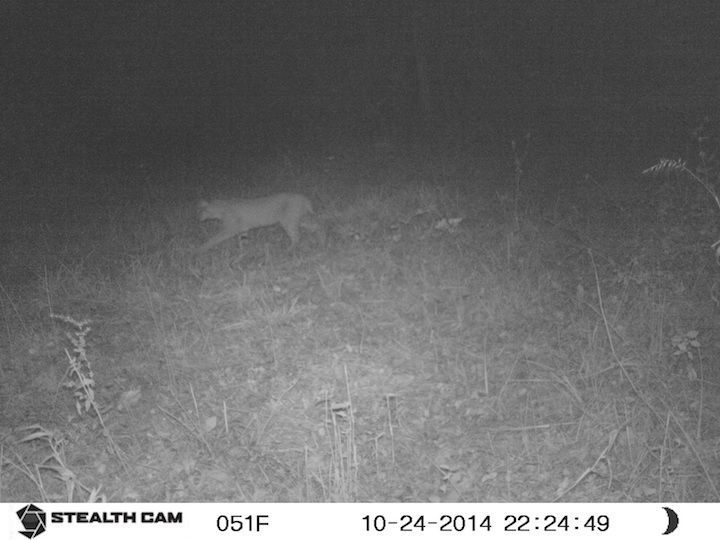 Bobcat Oct 25 15 SUNP0081 copy.jpg