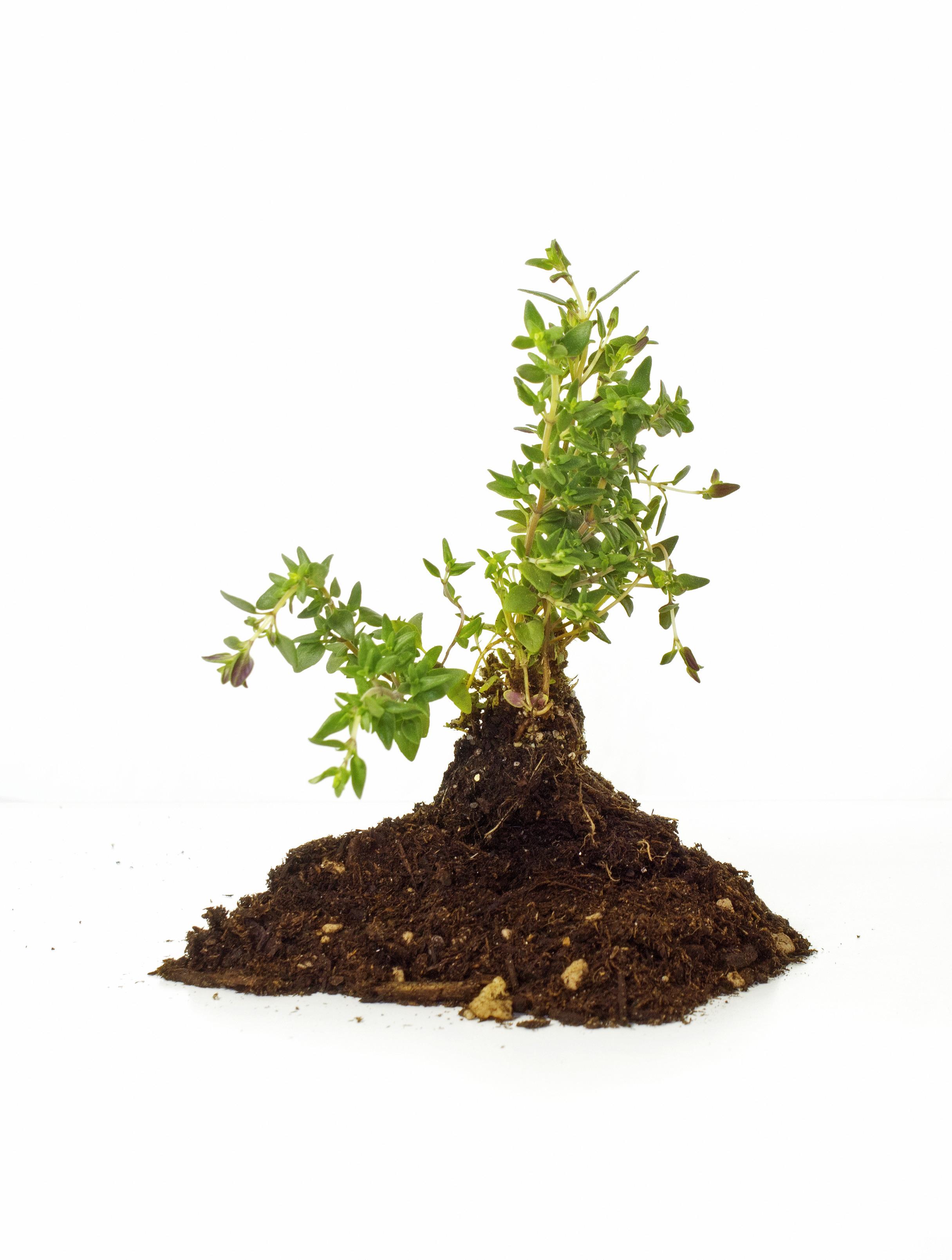 growing-plant-in-soil-172_GkV3cIKO.jpg