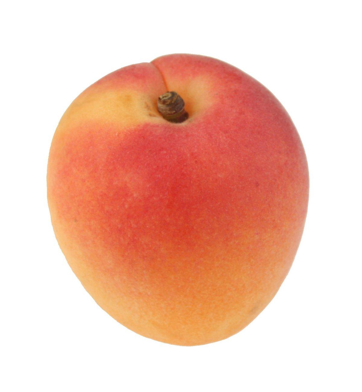 apricot01-lg.jpg