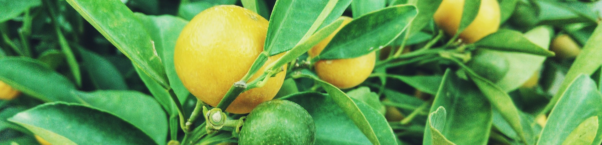 lemons-1149003_1920.jpg
