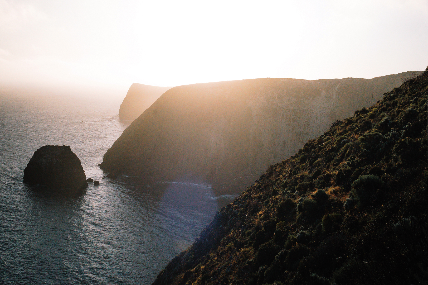 These cliffs, along Santa Cruz Island's northeastern shore, host one of the southernmost breeding colonies of Cassin's auklets ( Ptychoramphus aleuticus ). The cliffs offer the perfect vantage point for watching these stout seabirds feed by diving upwards of 150 feet into the crystal clear water, propelling themselves about in pursuit of krill.