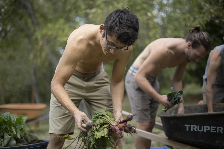 Bundling vegetables after the harvest (Oregon)