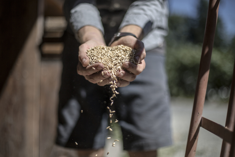 Rolling oats (British Columbia)
