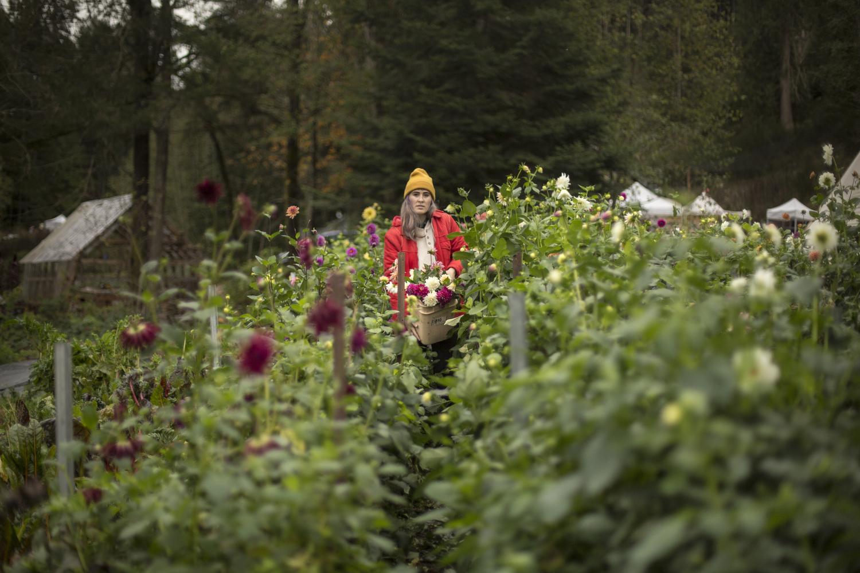 Finley harvesting the last flowers of the season. (British Columbia)