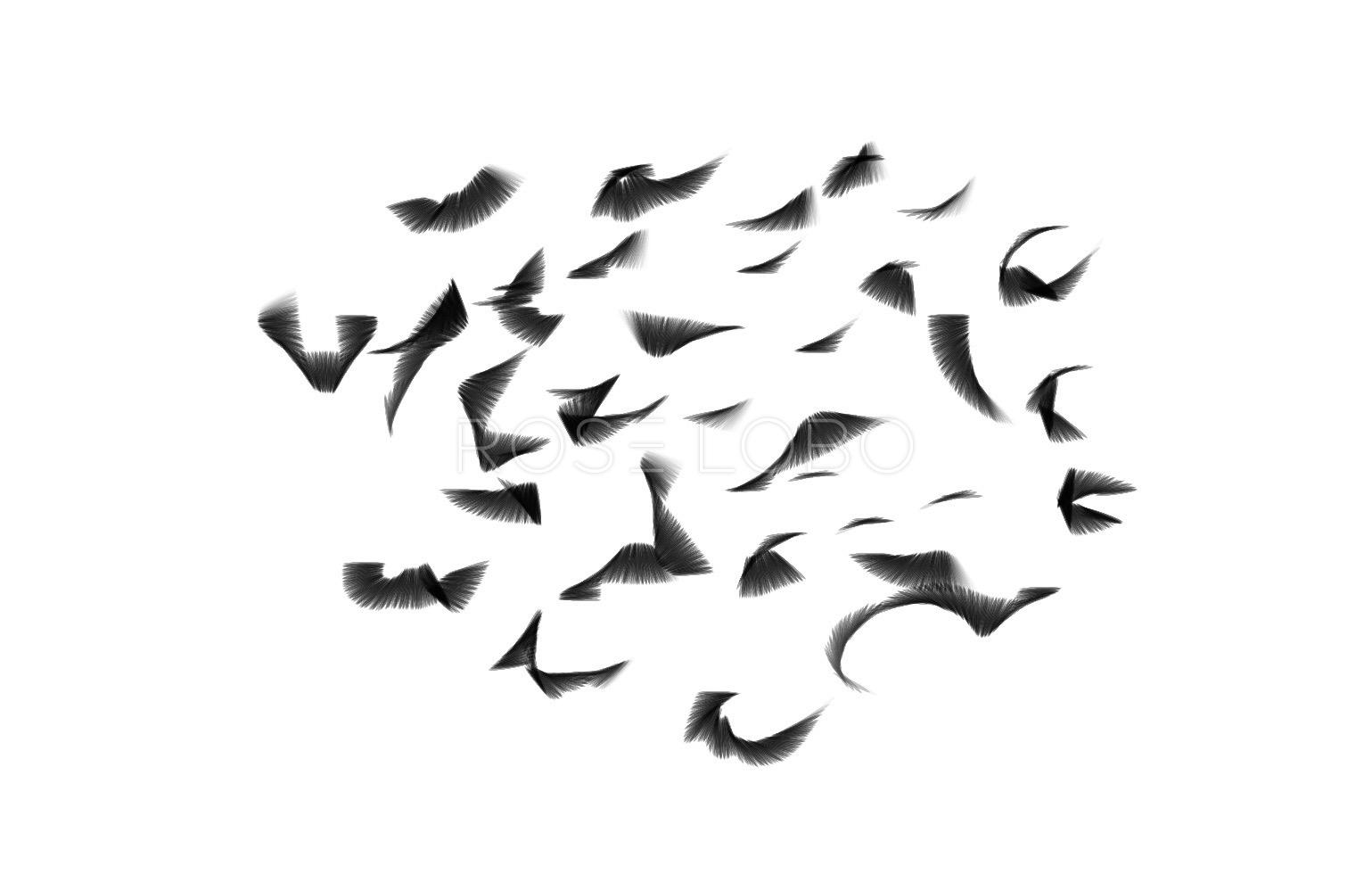FLYING LASHES 1