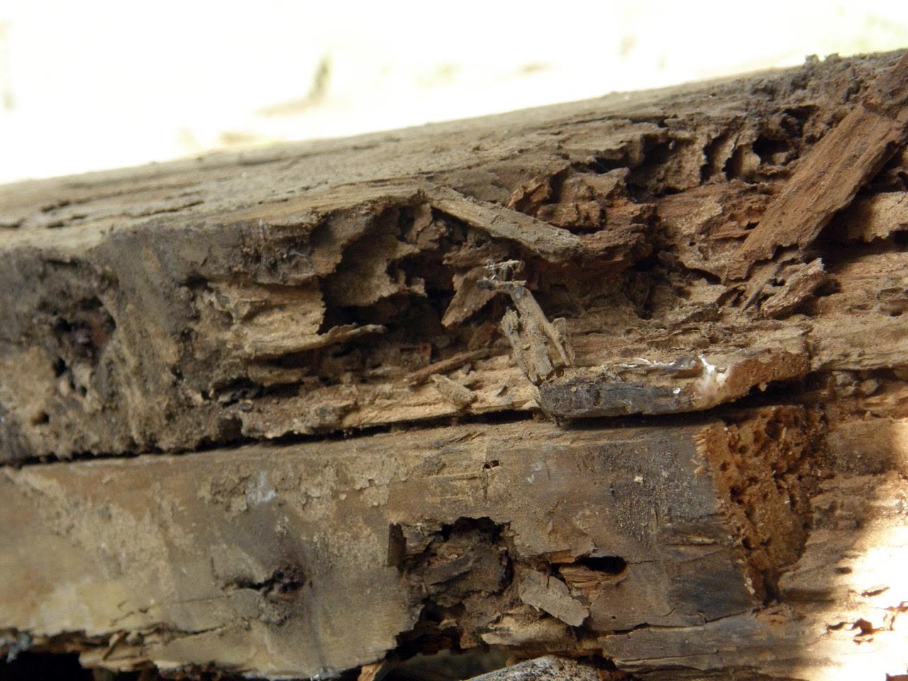 pest damage.jpg