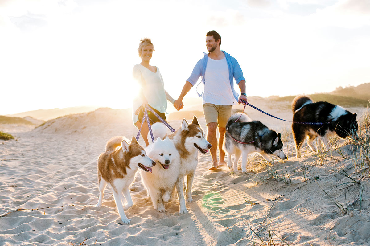 Beach couple with dogs