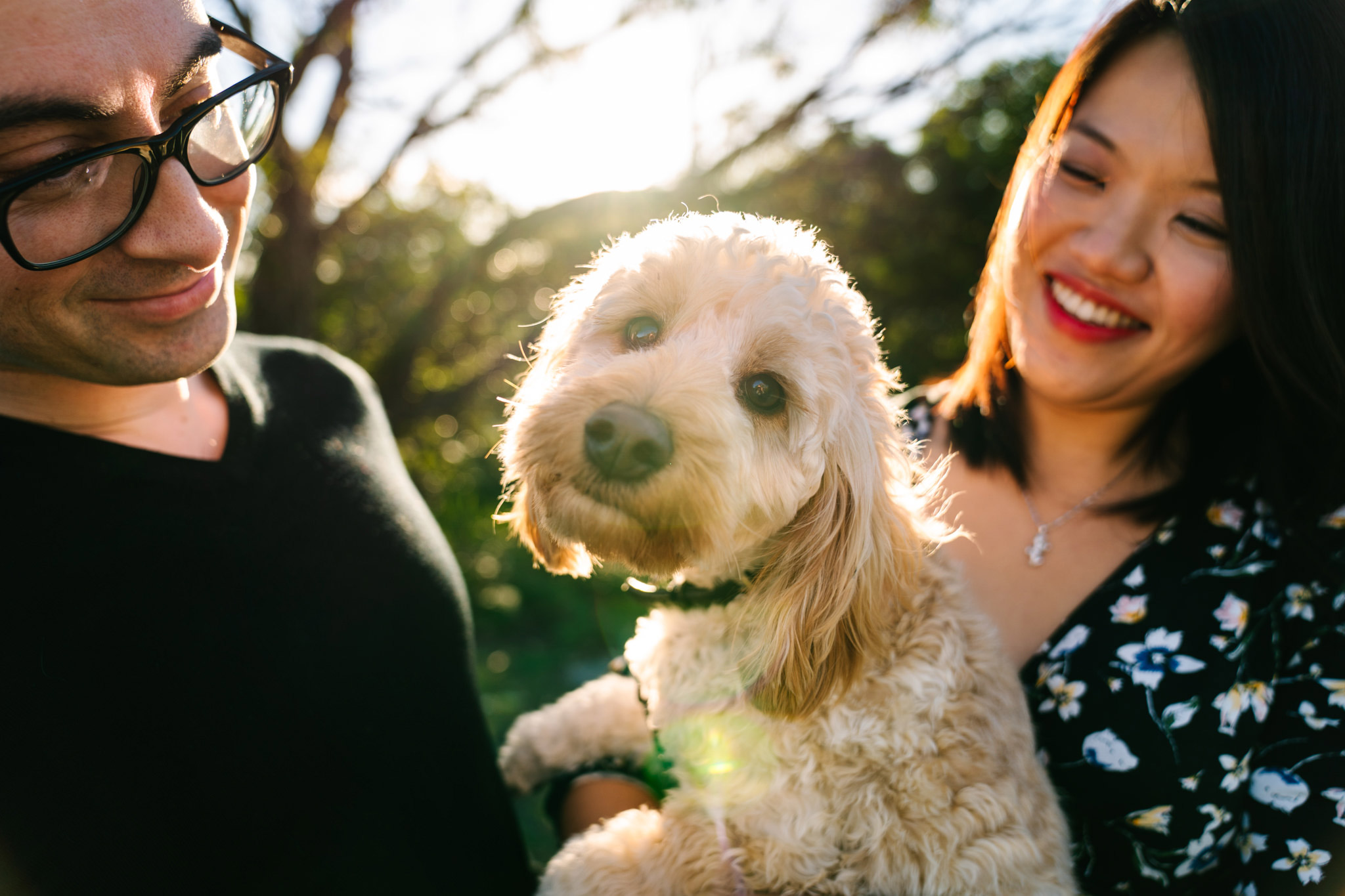 Cute poodle looking at camera while pregnant mother and father look on