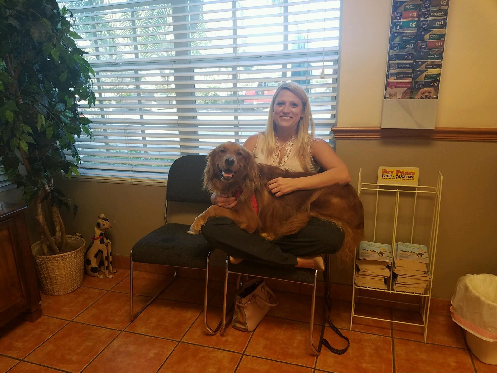 Luna, who is one of the participants in the Golden Retriever Lifetime study, sits in her owner's lap before her appointment.