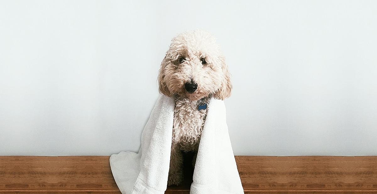 dog-bathed.jpg