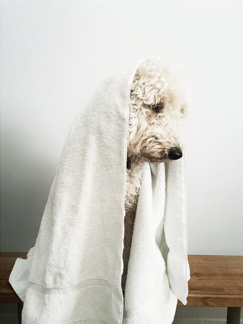 dog-in-towel.jpg