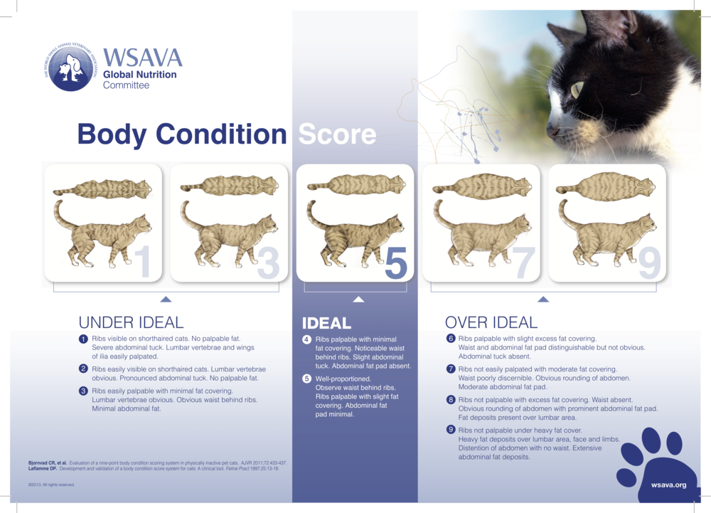 Photography source: Pet Obesity Prevention