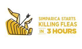 simparica-how_0002_Layer 1.jpg