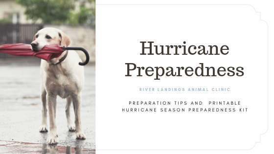 blog_Hurricane Season Preparedness_banner.png