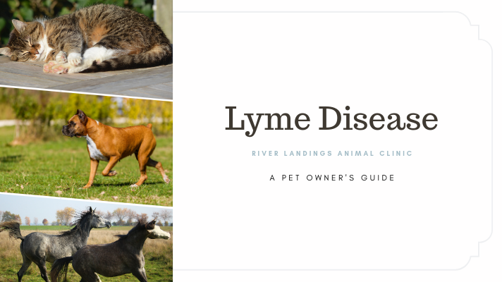 blog_Lyme Disease in Dogs_banner.png