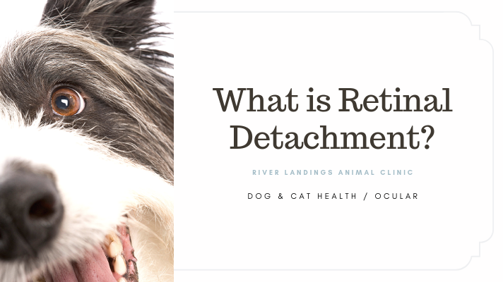 blog_ Retinal Detachment _banner.png
