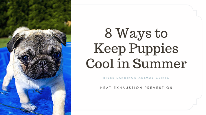 blog_ 8 Ways to Keep Puppies Cool in Summer _banner.png