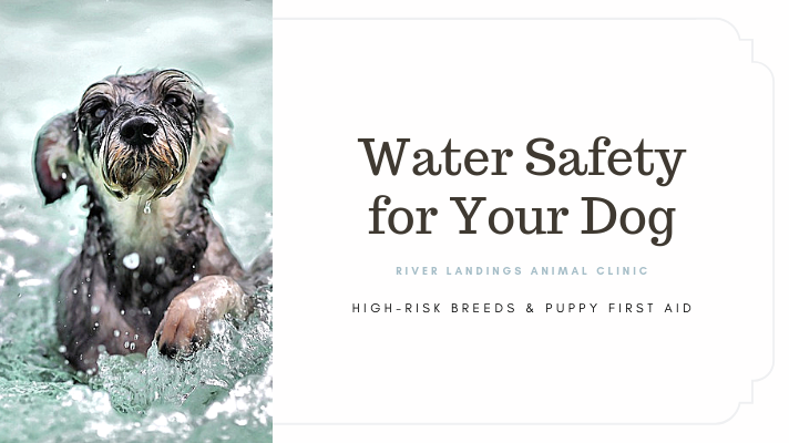 blog_ Water Safety _banner.png