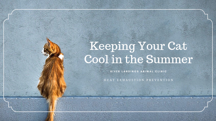 blog_ Keep Cat Cool in The Summer _banner.png