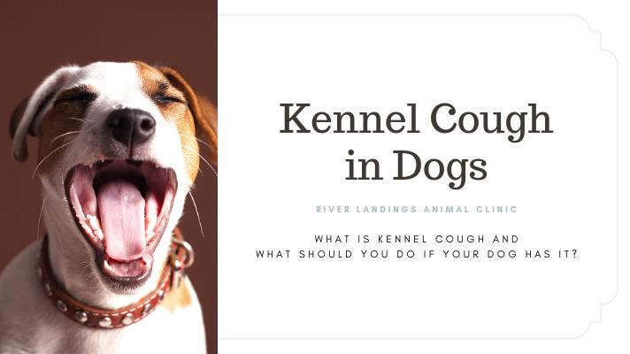 blog_ Kennel Cough _banner.png