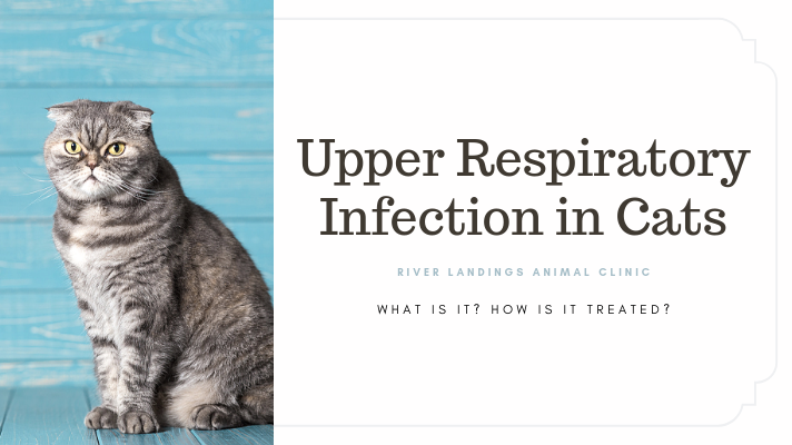 blog_ Upper Resp Infection in Cats _banner.png