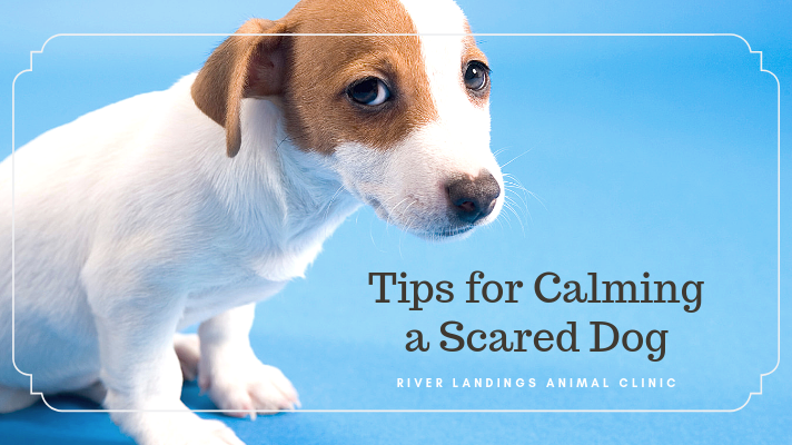 blog_Calming a Scared Dog_banner.png