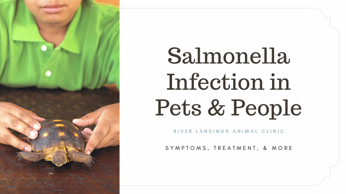 blog_Salmonella_banner.png