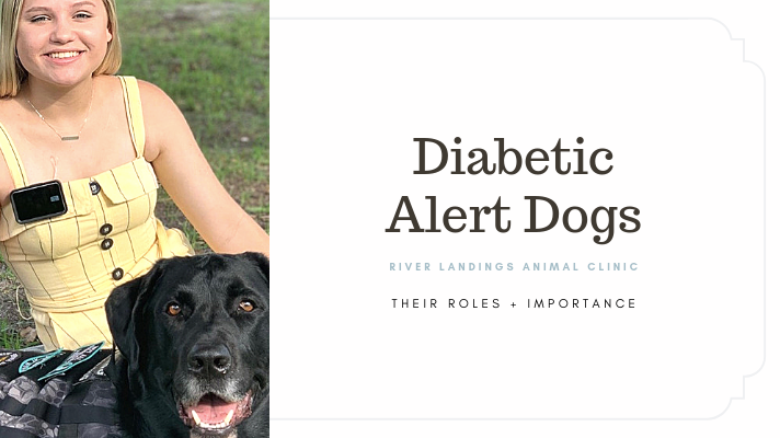 blog_ diabetic alert dogs _banner.png