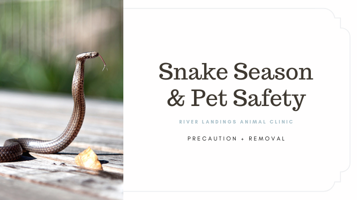 blog_  Snake Season and Pet Safety _banner.png