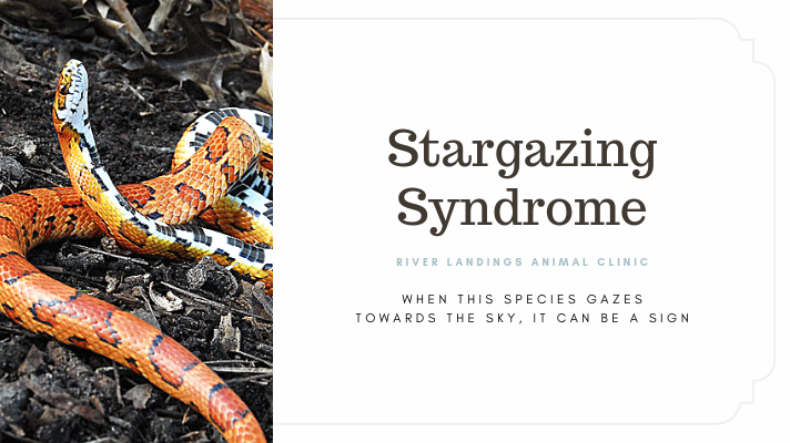 blog_ Stargazing Syndrome _banner.png