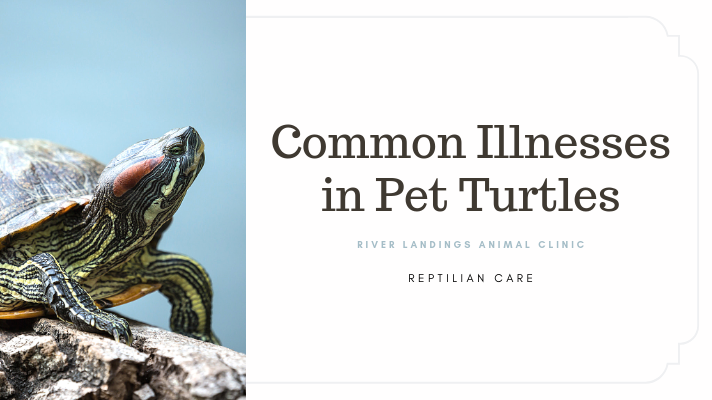 blog_ common illness in turtles _banner.png