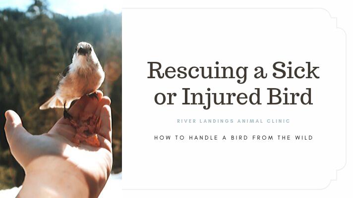 blog_ RescueWildBird _banner.png