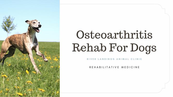 blog_ Osteoarthritis _banner.png