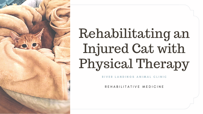 blog_ CatRehab _banner.png