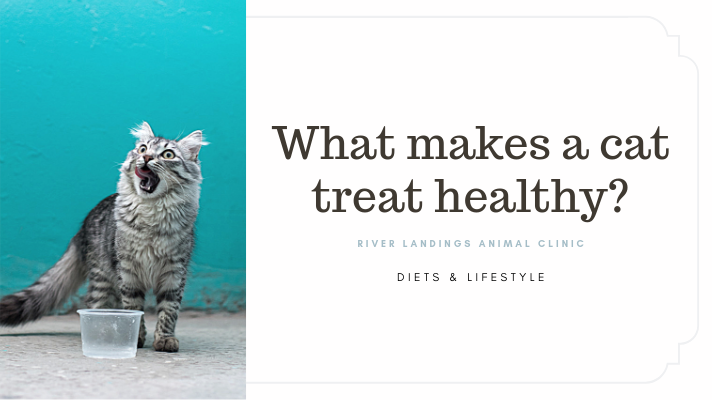 blog_ HealthyCatTreats _banner.png