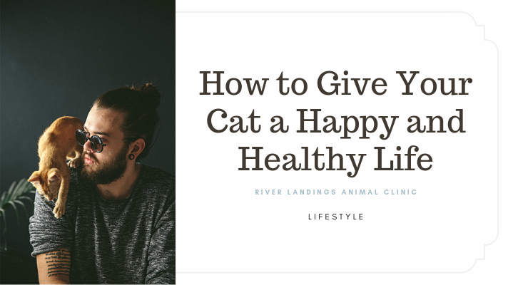 blog_ lifestyle health cat _banner.png