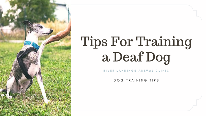 blog_ deaf dog training tips _banner.png