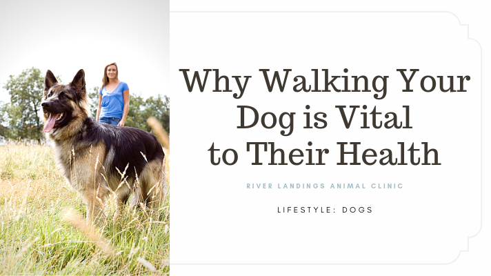 blog_ Walking is Vital _banner.png