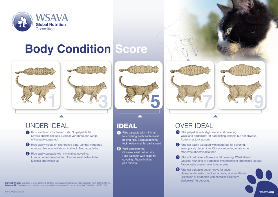 Body+condition+score+chart+cats.png