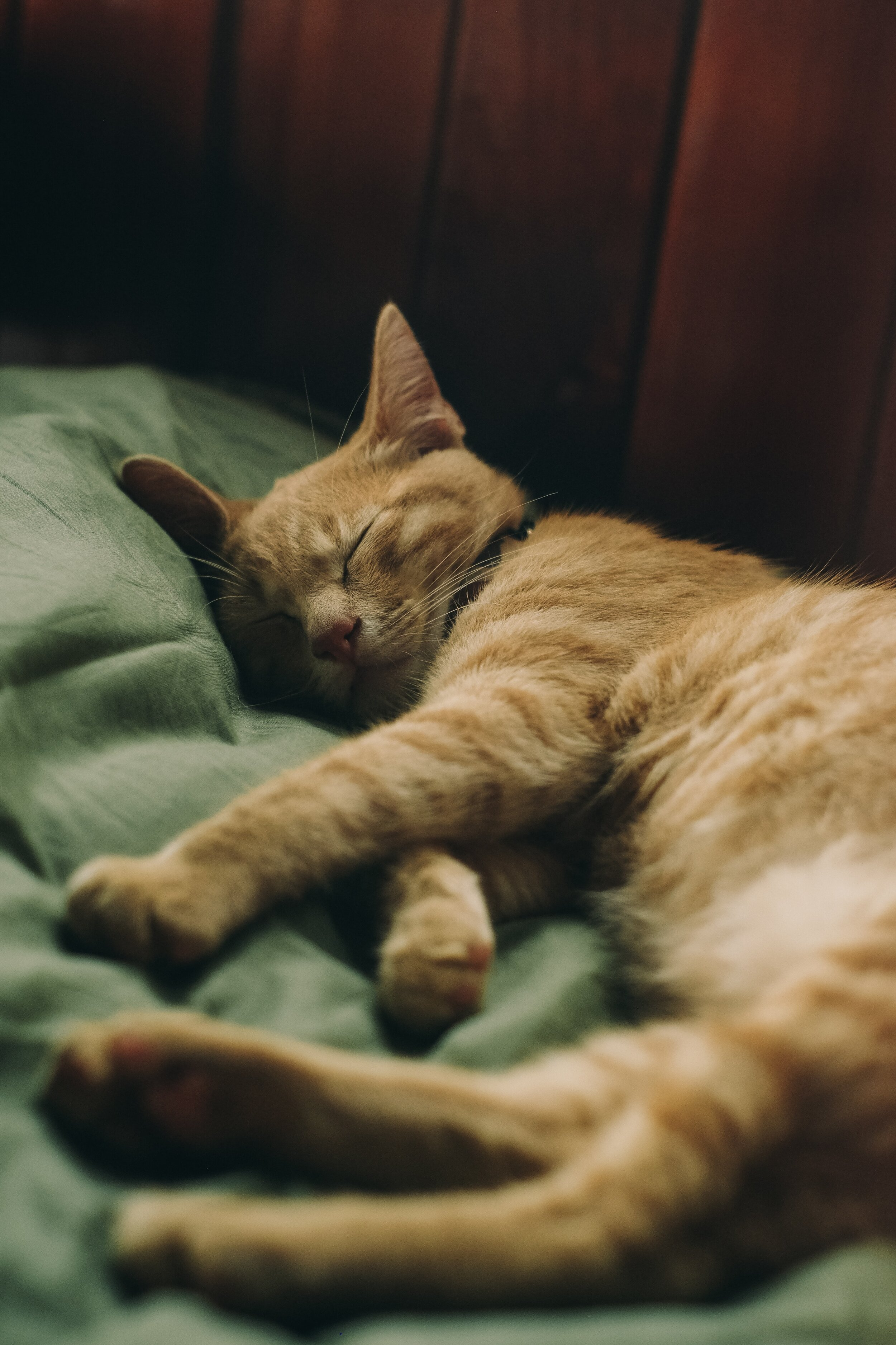 - It's also important to monitor your cat after being diagnosed with FLUTD during treatment to ensure that the problem doesn't reoccur as cats are good at hiding their pain.