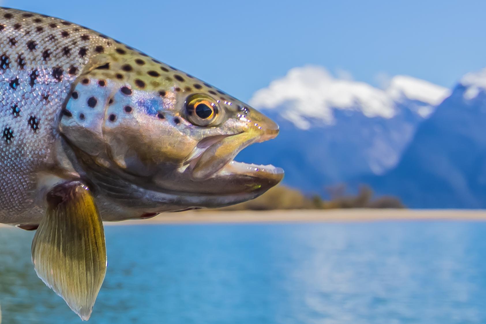 Fishing Information -