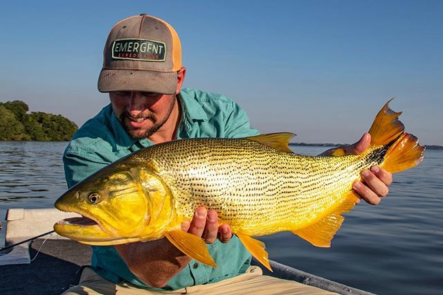 This fine GD is one of the many great reasons to book a trip to fish with @doradosonthefly for late 2019 or early 2020.  This destination is easily added onto a trip to Patagonia Argentina or Chile and with easy access and favorable climate you will only have to worry about hooking up! #gowithemergent #emergentx #emergentexpeditions #flyfish #flyfishing #goldendorado #gd #streamers #wireleaders #flies #doradoonthefly #goldenhour #rivertime #findyourwater #forgettheforecast #rioproducts #redingtongear #simmsfishing #smithoptics #nautilusreels @ramileale @yosoyelciru @redingtongear @simmsfishing @simmsbass @rioproducts @smithoptics @patagonia @patagonia_flyfish