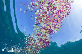 underwater flowers-04_©hank foto copy.jpg