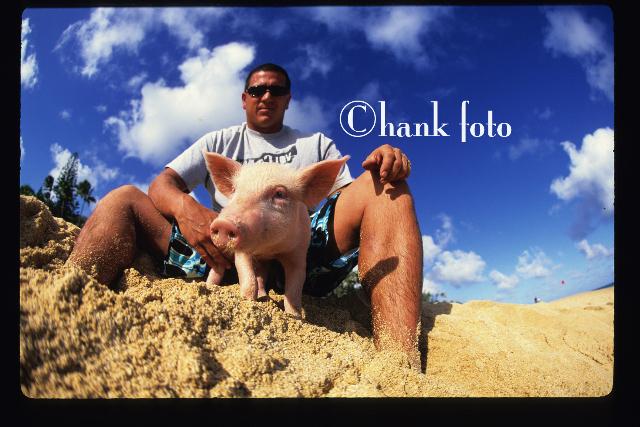 chava-spam the pig_©hank foto_9269.jpg
