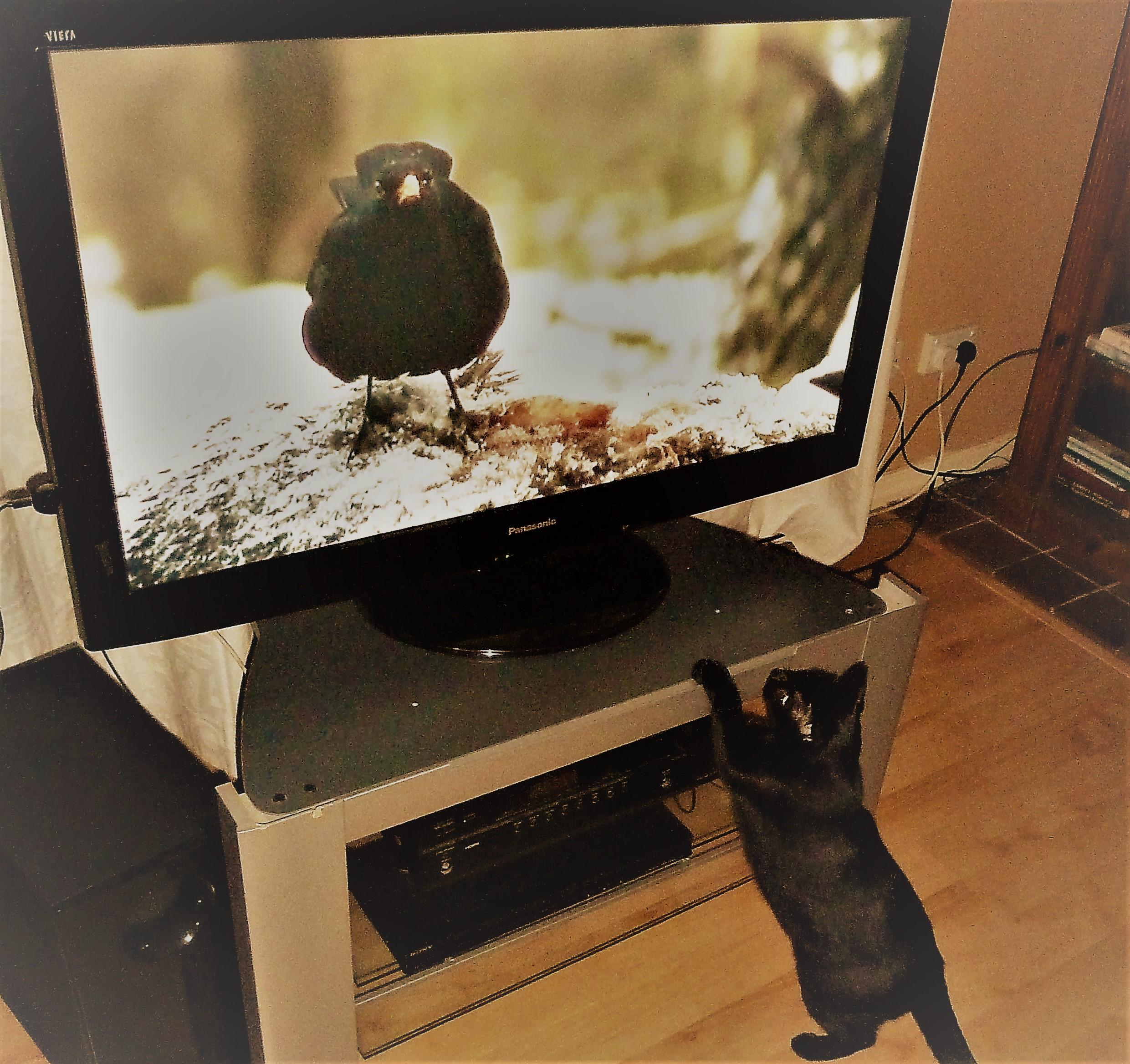 cat-watching-the-tv.jpg