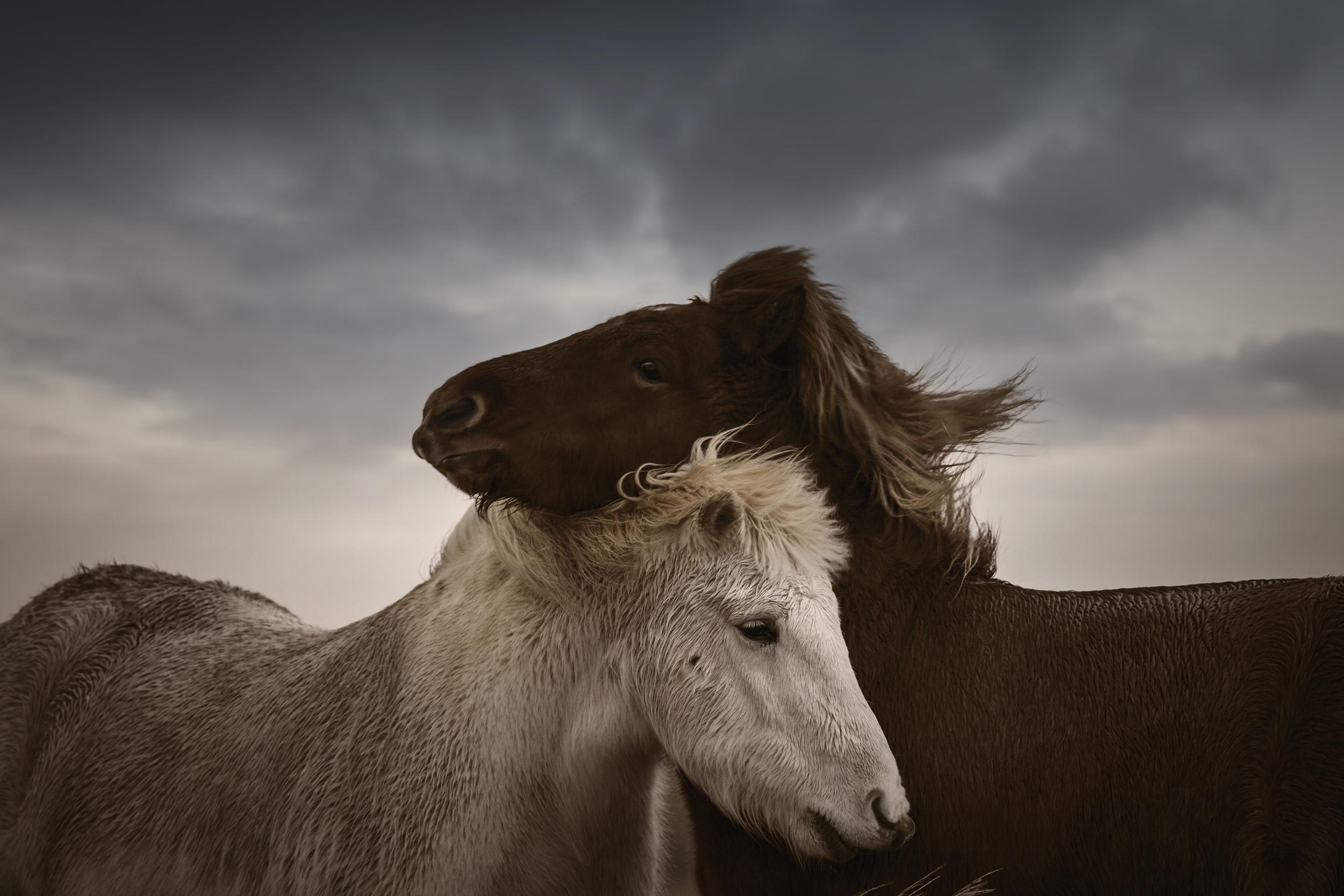 HorsesYinYang.jpg