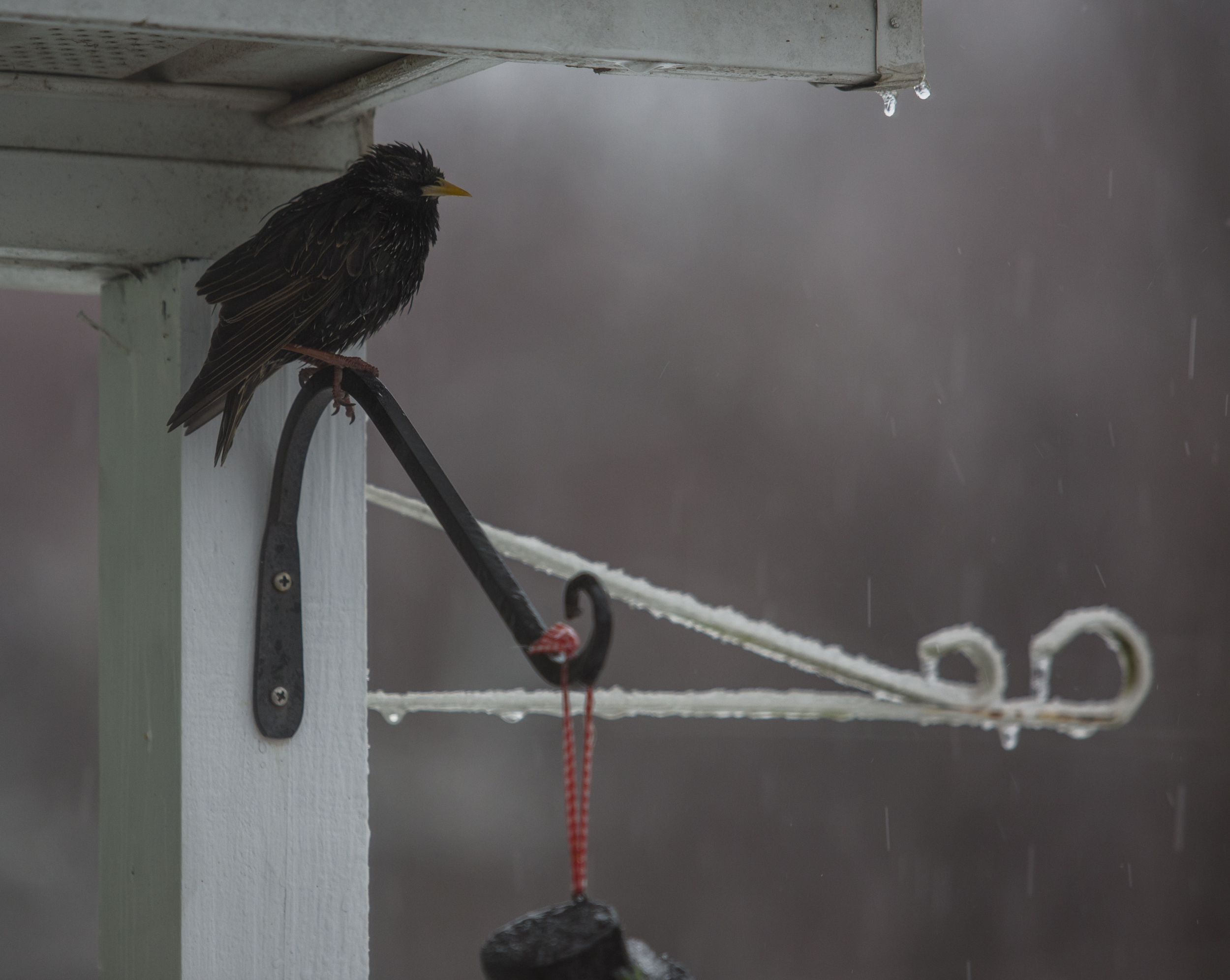 A bird perches under a porch awning seeking shelter from winter storm Stella on Tuesday, March 14, 2017.