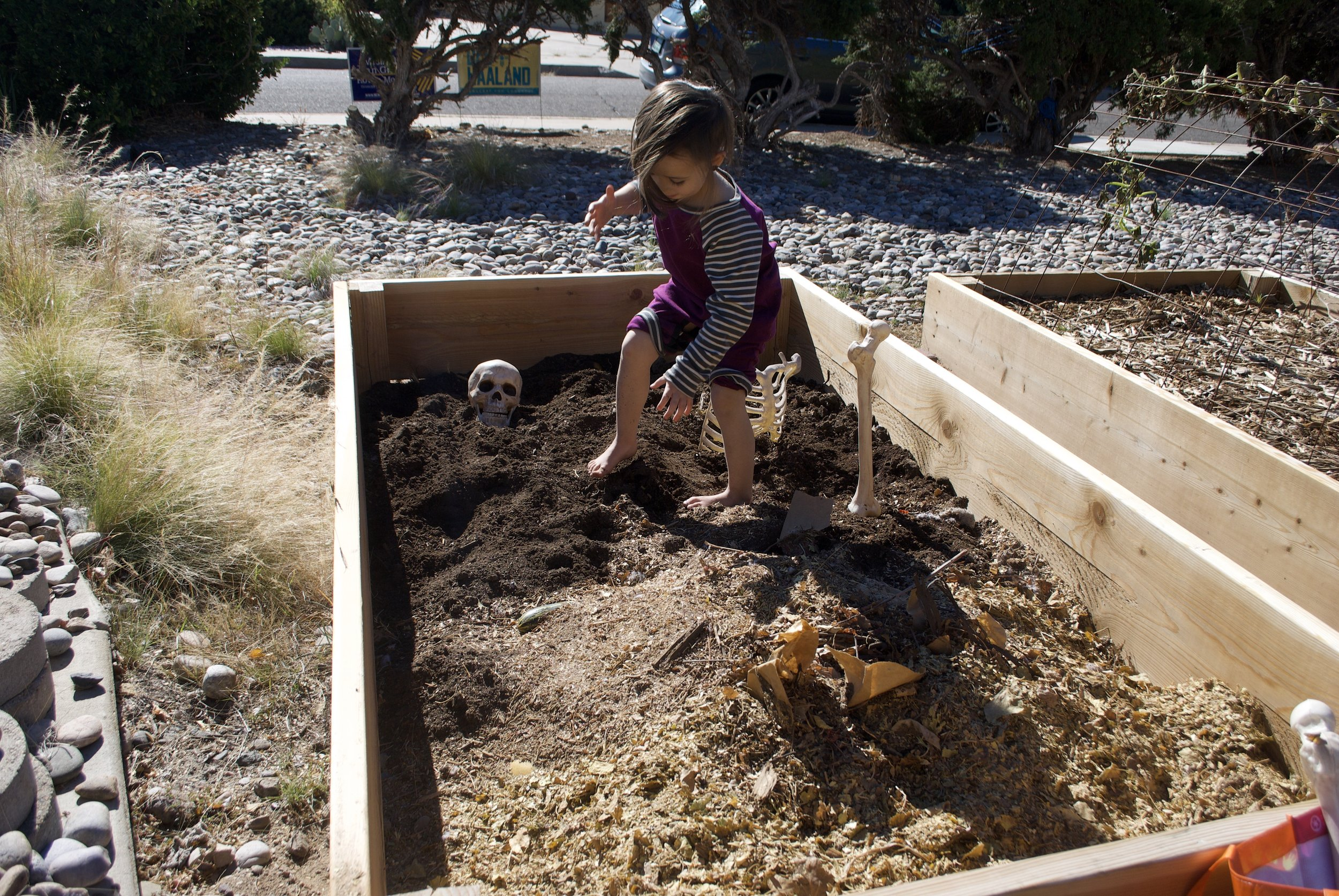 4-year-old simultaneously prepping garden bed for winter composting and for Halloween.
