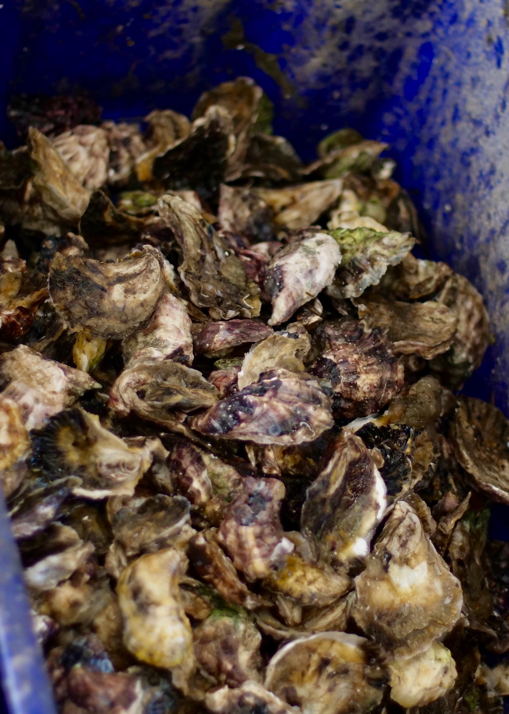 oystersBlue01.jpg